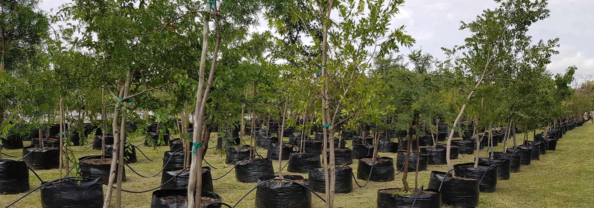 Hardy Trees